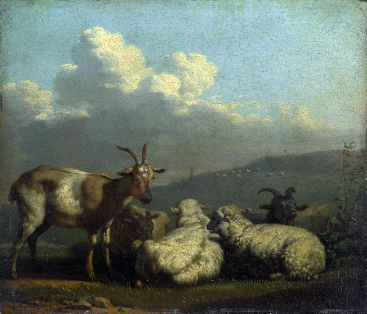 Карел Дюжарден. Овцы и козы