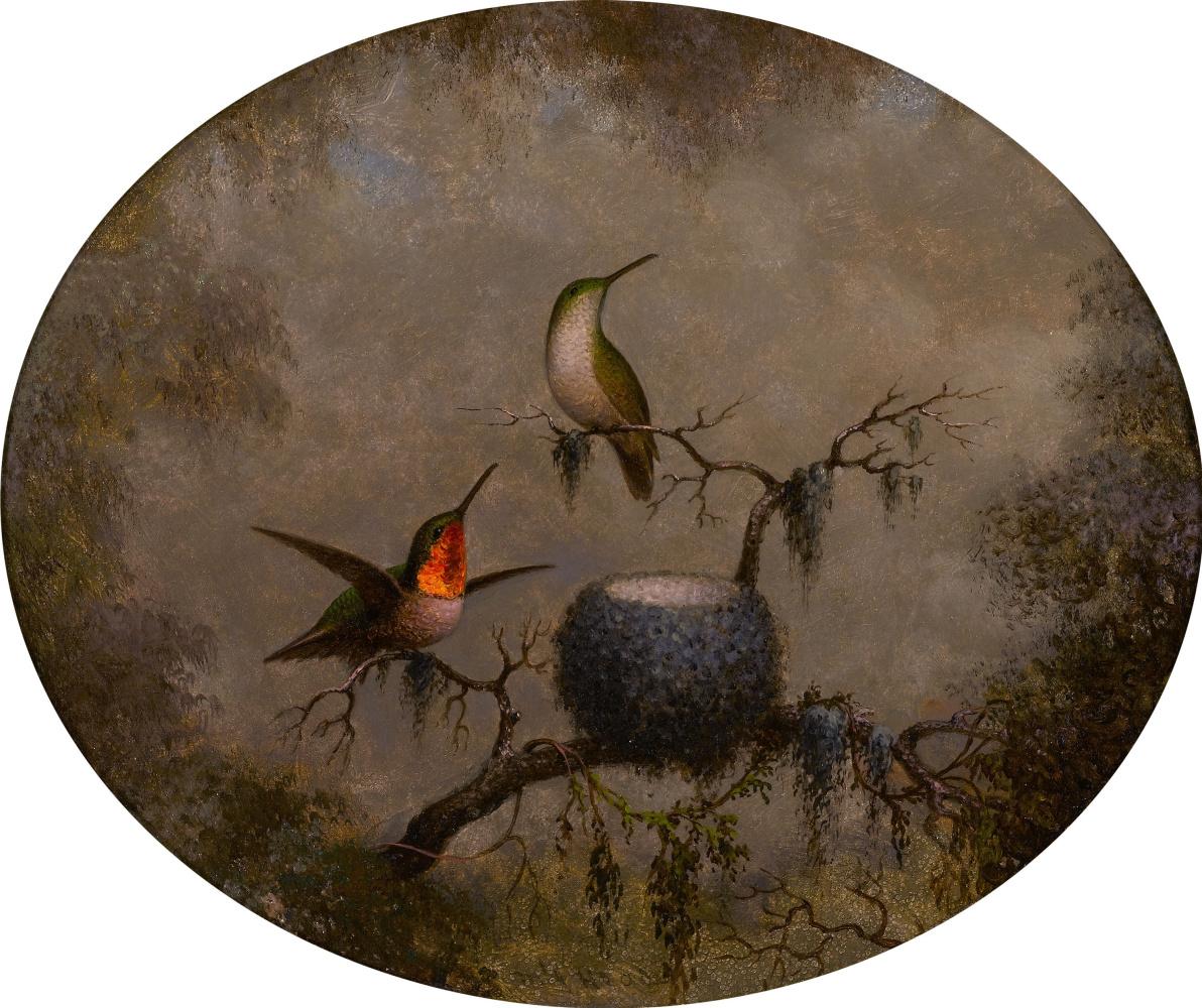 Martin Johnson Head. Ruby-brown hummingbird at the nest (oval)