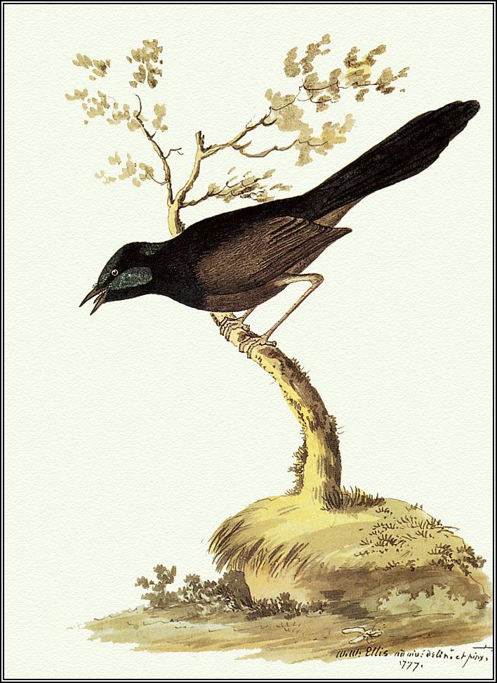 Пенни Олсен. Птица на ветке