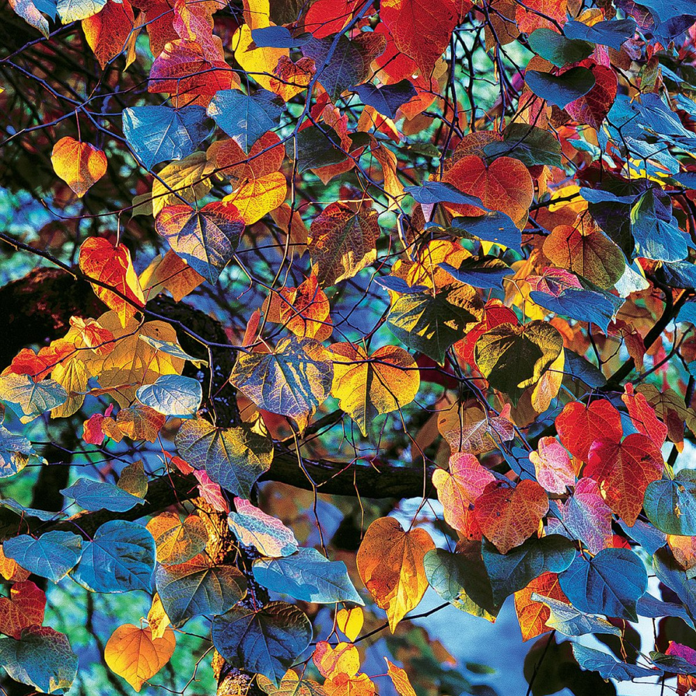 Christopher Burkett. Leaves at sunset