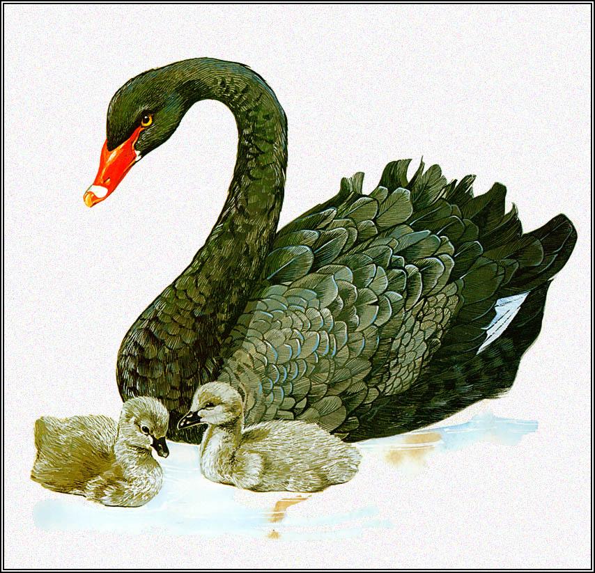 Тони Оливер. Чёрный лебедь