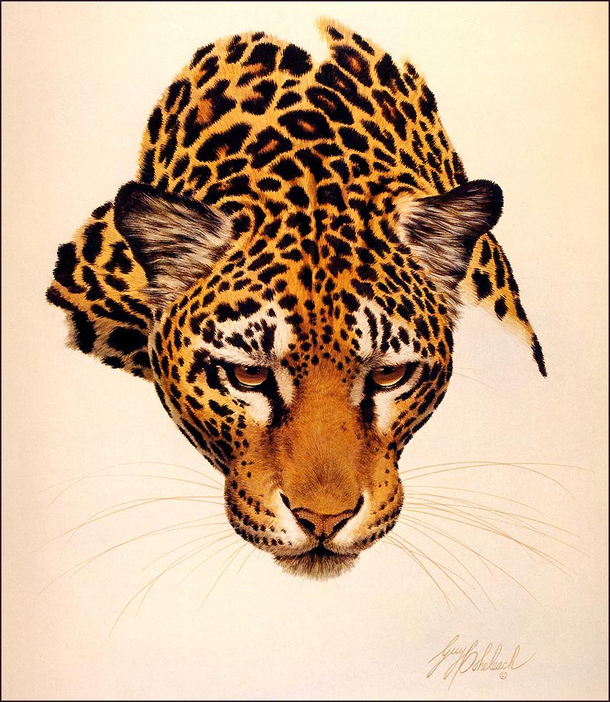 Гай Кохелич. Голова ягуара