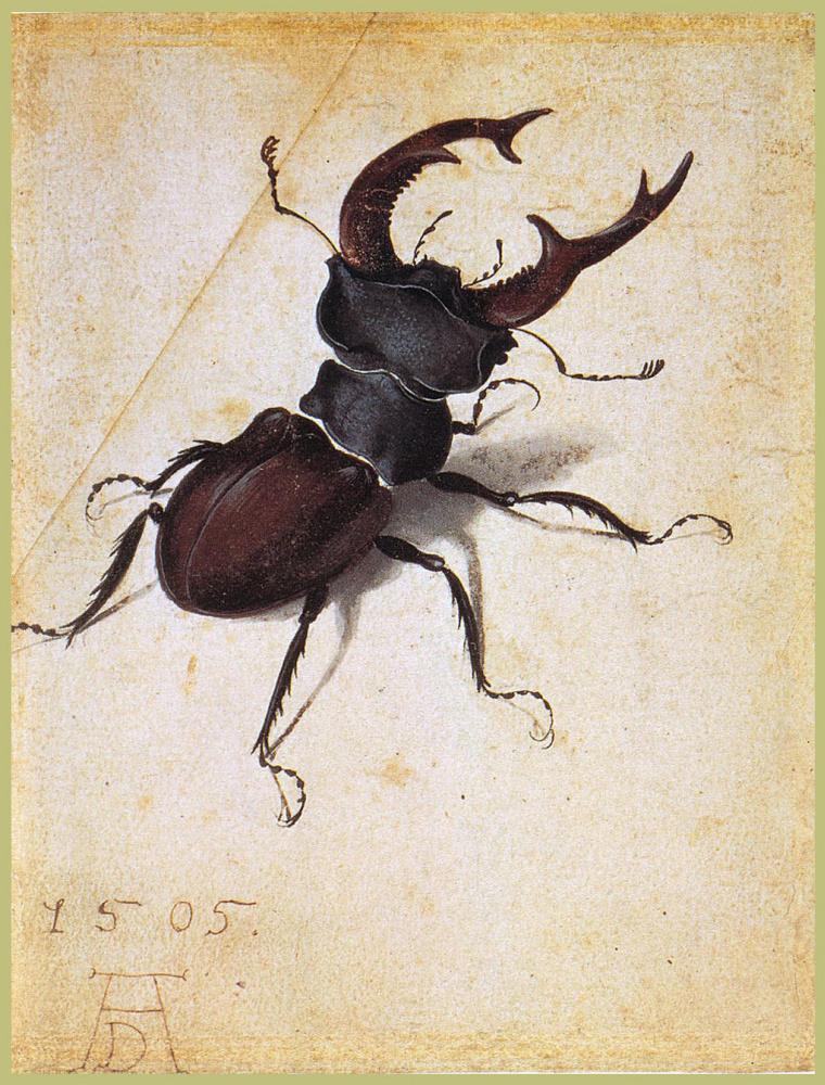 Albrecht Durer. Beetle