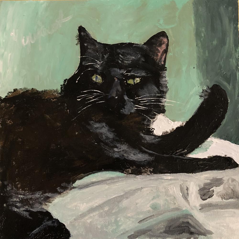 Phaque u parce que. Black cat in green room