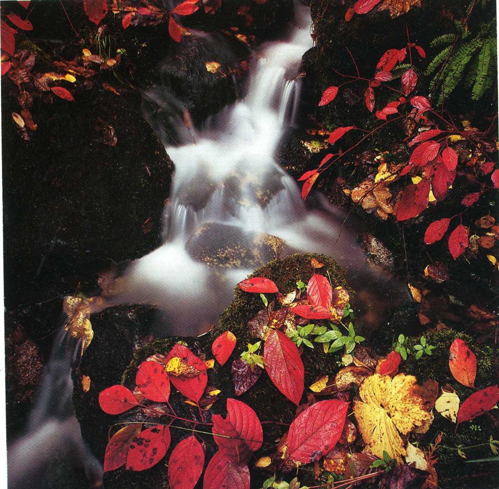 Дэвид Мюнх. Осенние листья