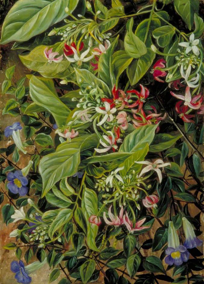 Marianna North. Blooming bindweed on a bush, Singapore