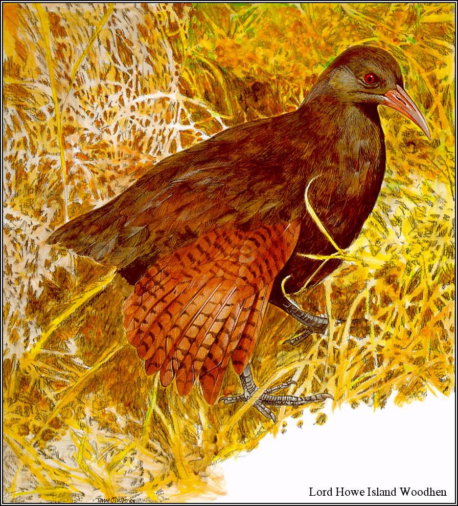 Toni Oliver. Australian endangered species 09