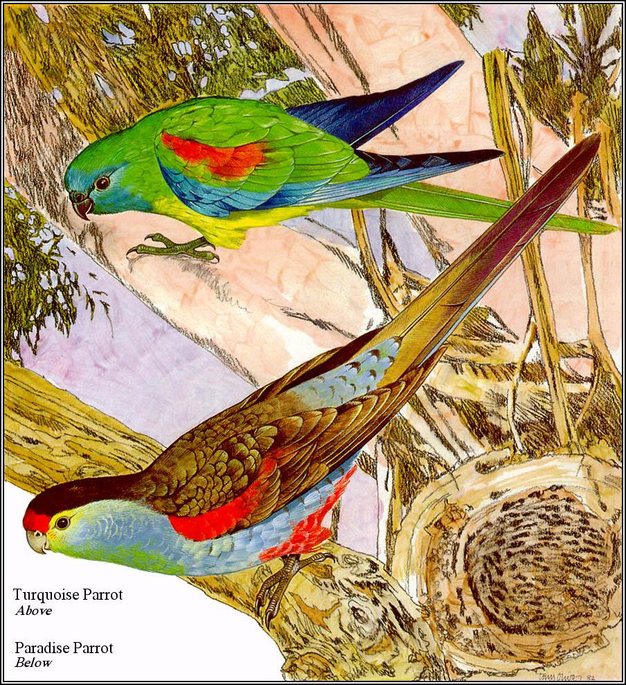 Тони Оливер. Австралийские вымирающие виды 02