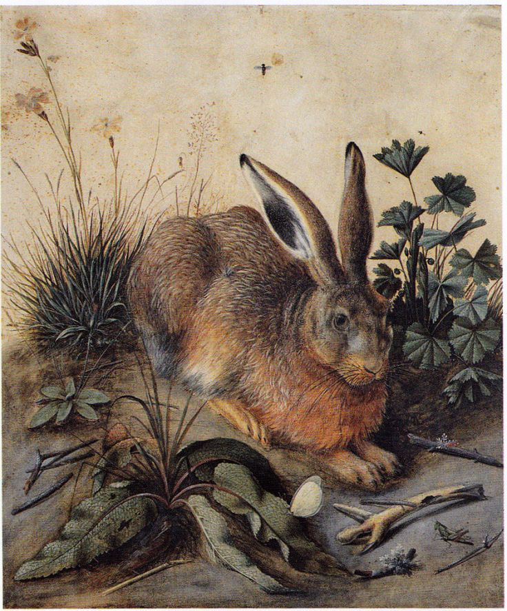 Hans Hoffmann. A variation on the theme durasovskom hare