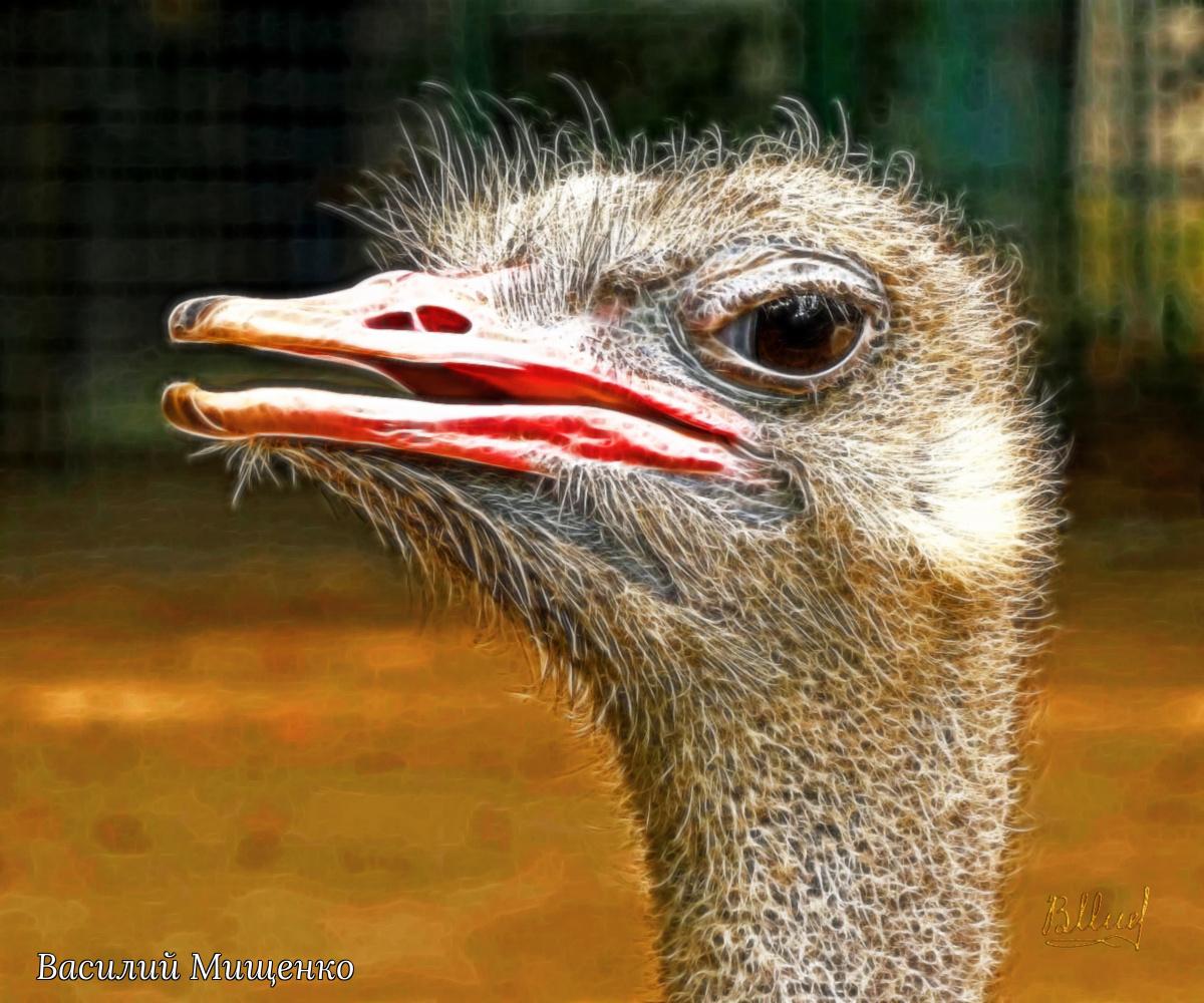 Vasiliy Mishchenko. Curious ostrich