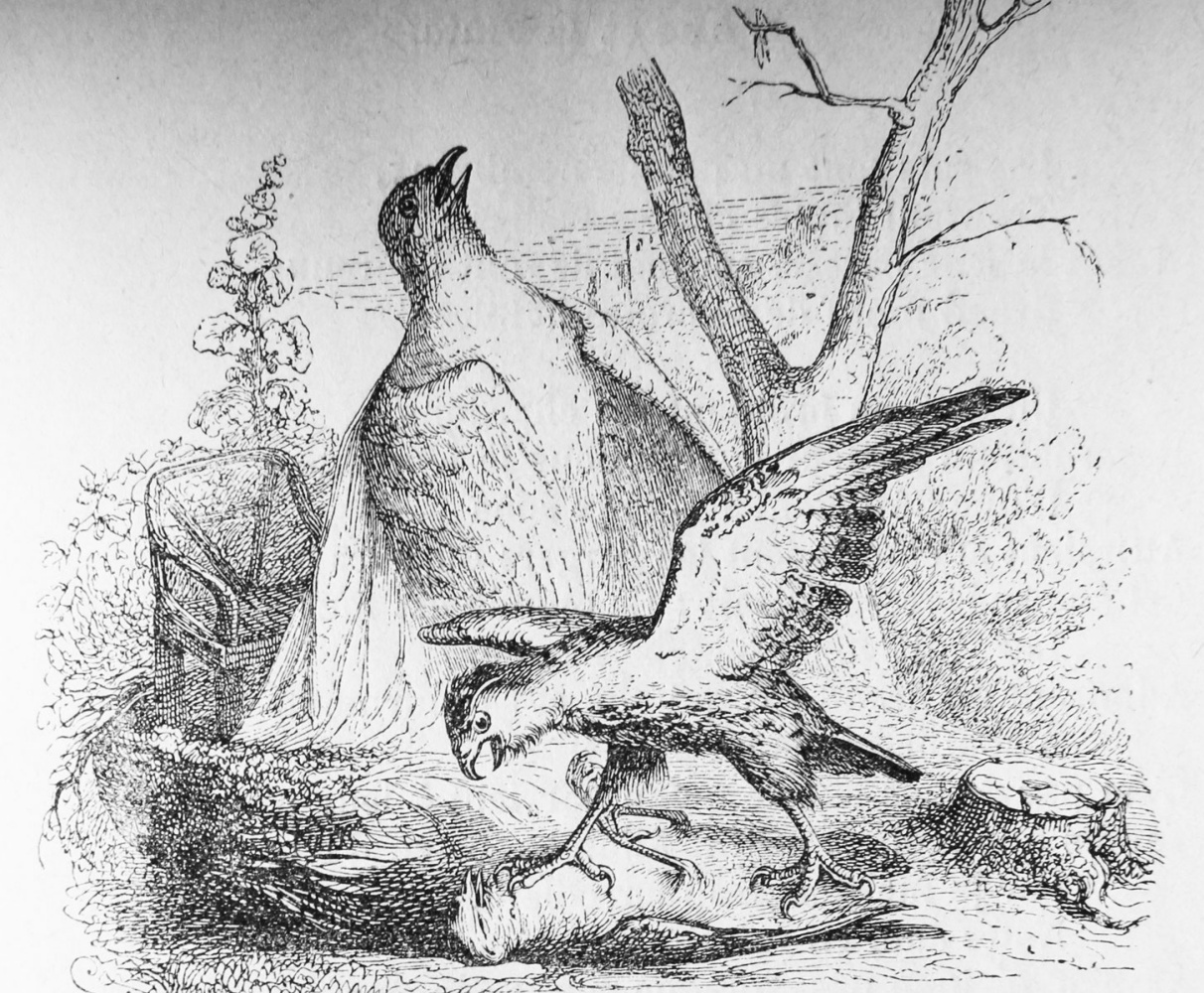 Jean Inias Isidore (Gerard) Granville. Pigeon and his chick. Illustrations to the fables of Florian