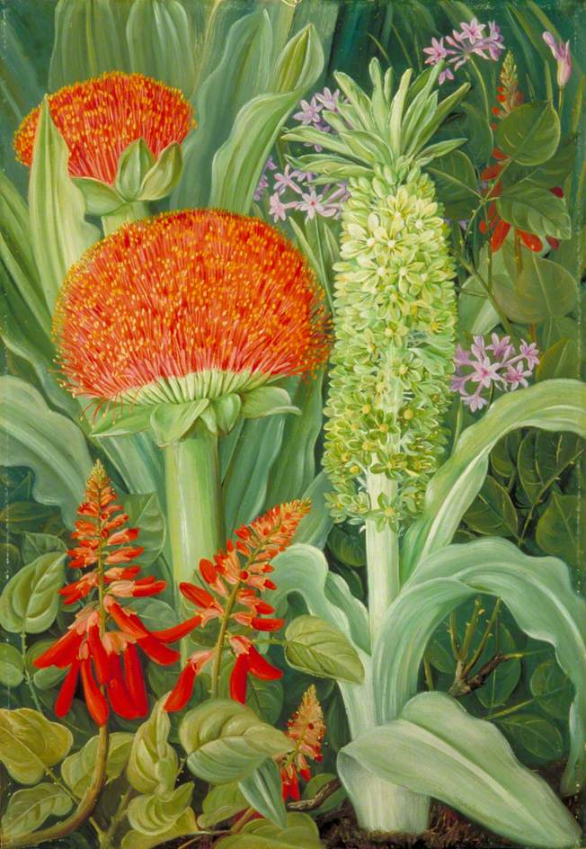Marianna North. Flowers of South Africa