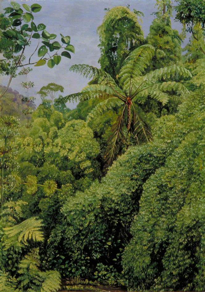 Marianna North. Ferns and Bamboo in Gongo Forest, Brazil