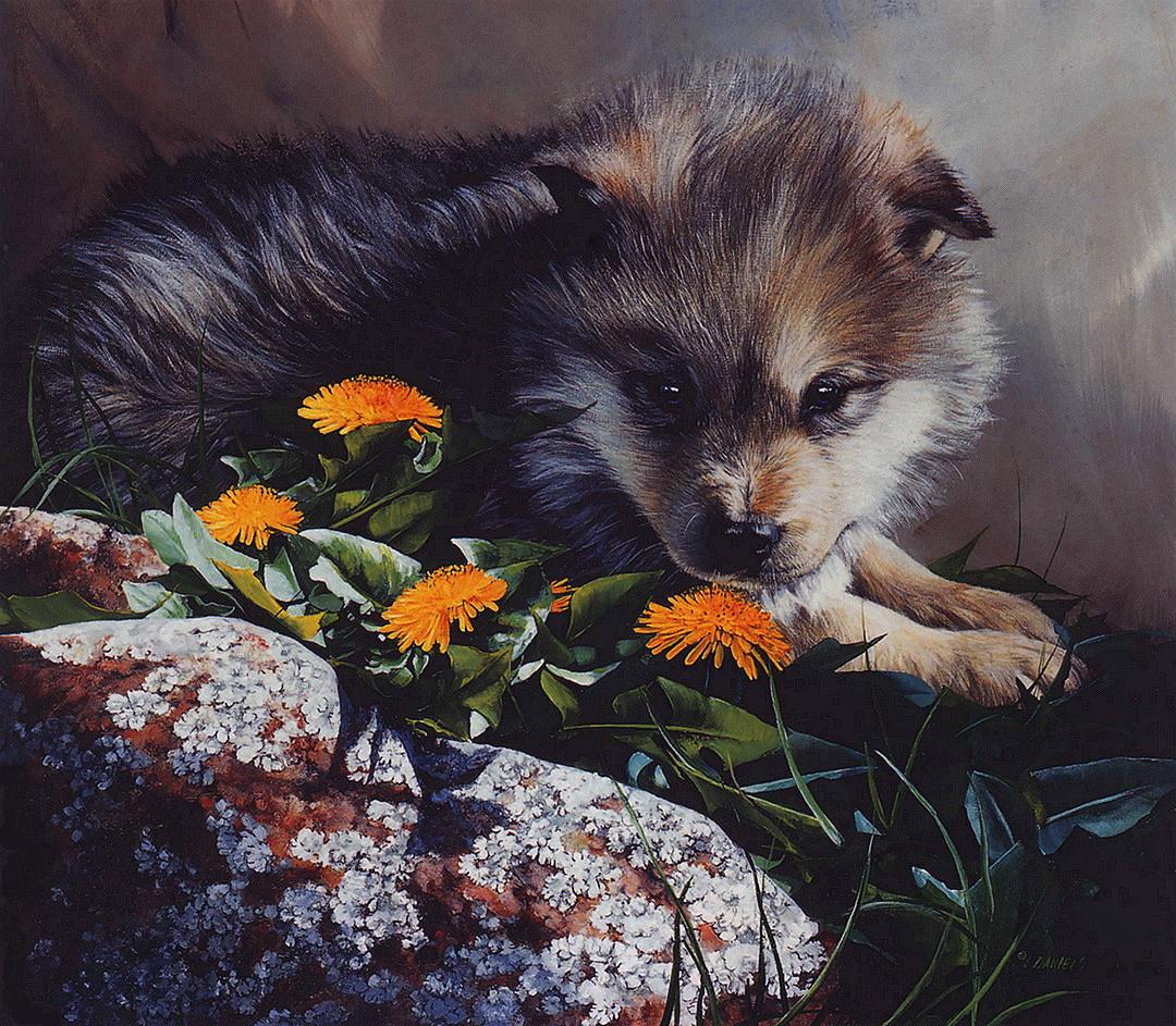 Дэниелс Линда. Волчонок