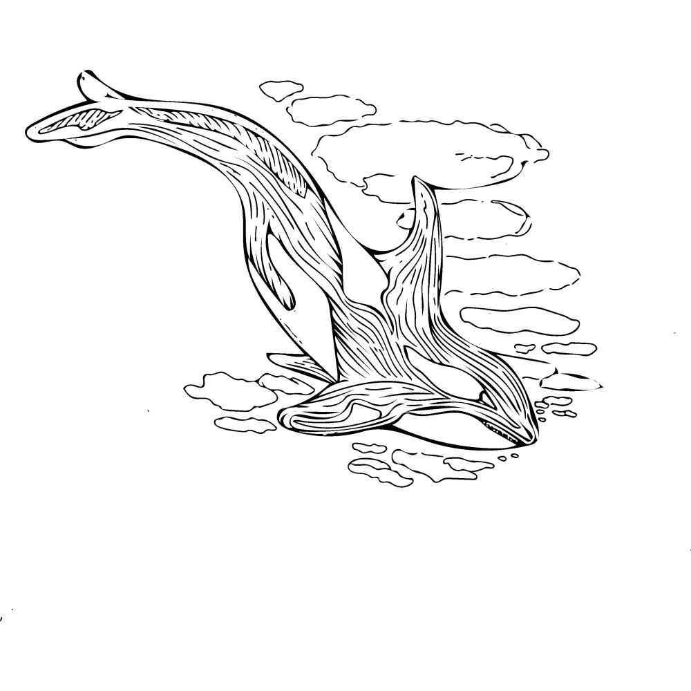 Moiseeva Angelina. Killer whale