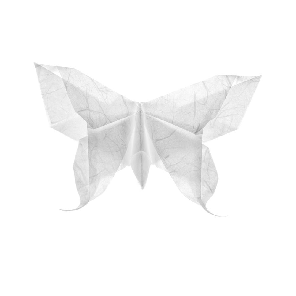 Yuri Palibroda. Origami butterfly (high key)