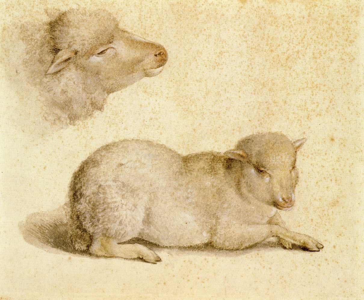 Ганс Гольбейн Младший. Отдыхающий ягненок и голова ягненка