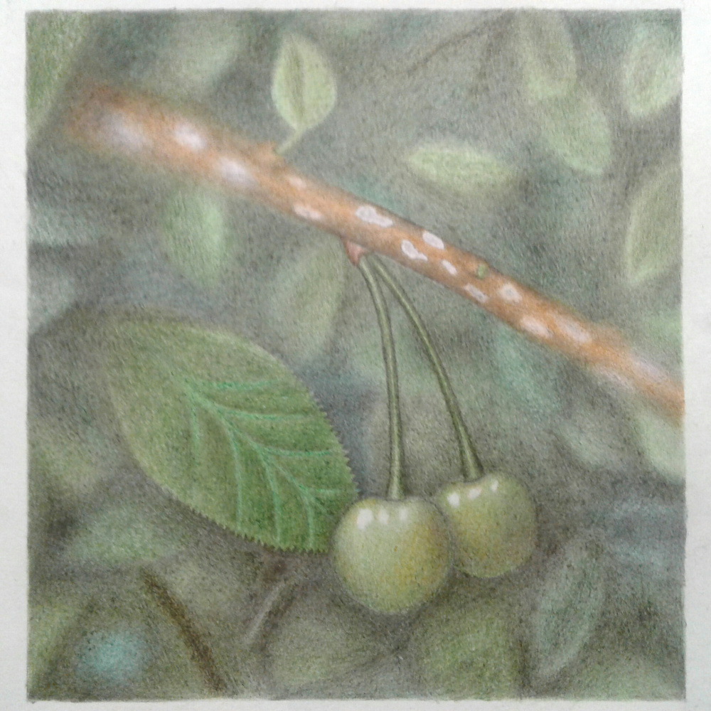 Artem Mushroom. Cherry