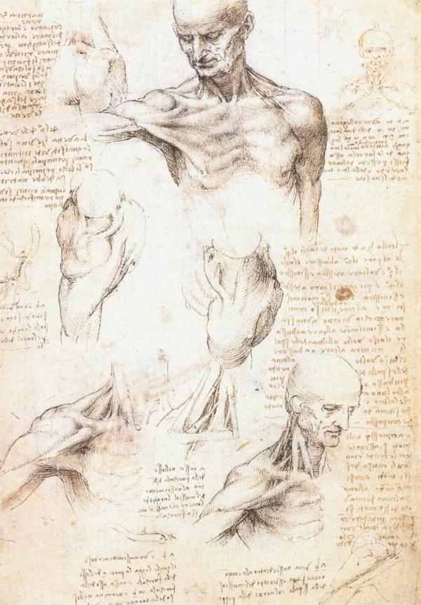 Leonardo da Vinci. Anatomical drawings of shoulder men