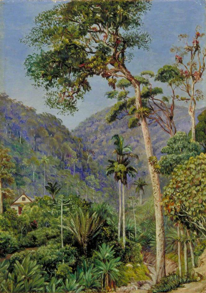 Marianna North. Landscape with Mr. Weilhorn's house, Petropolis, Brazil