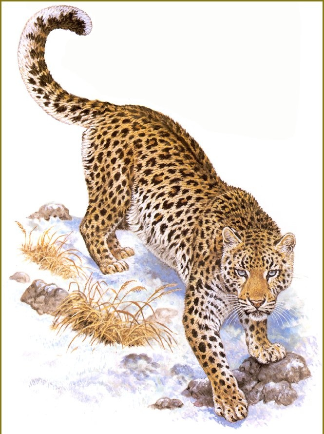 leopard article analysis