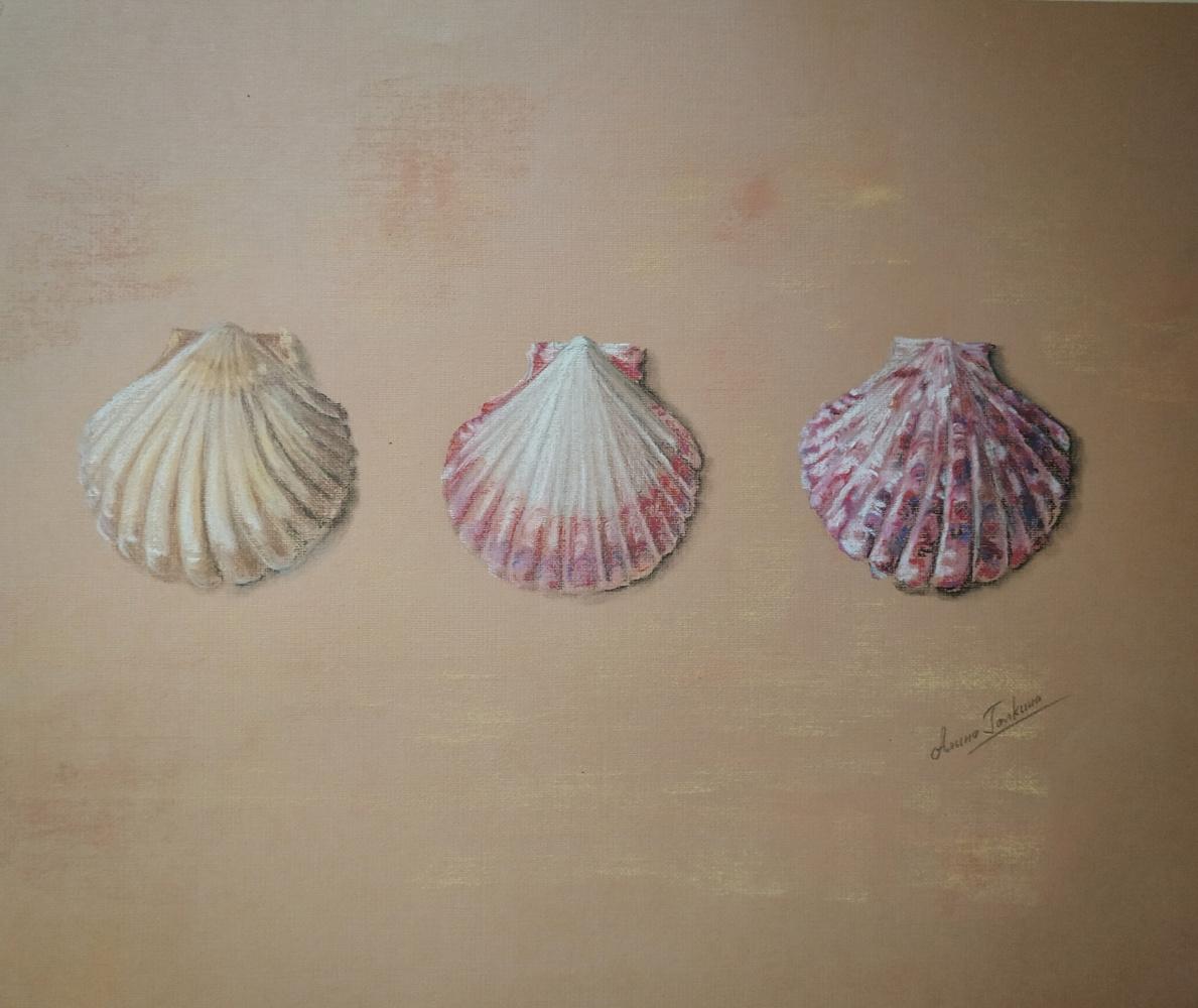 Алина Евгеньевна Шварёва (Галкина). Shells