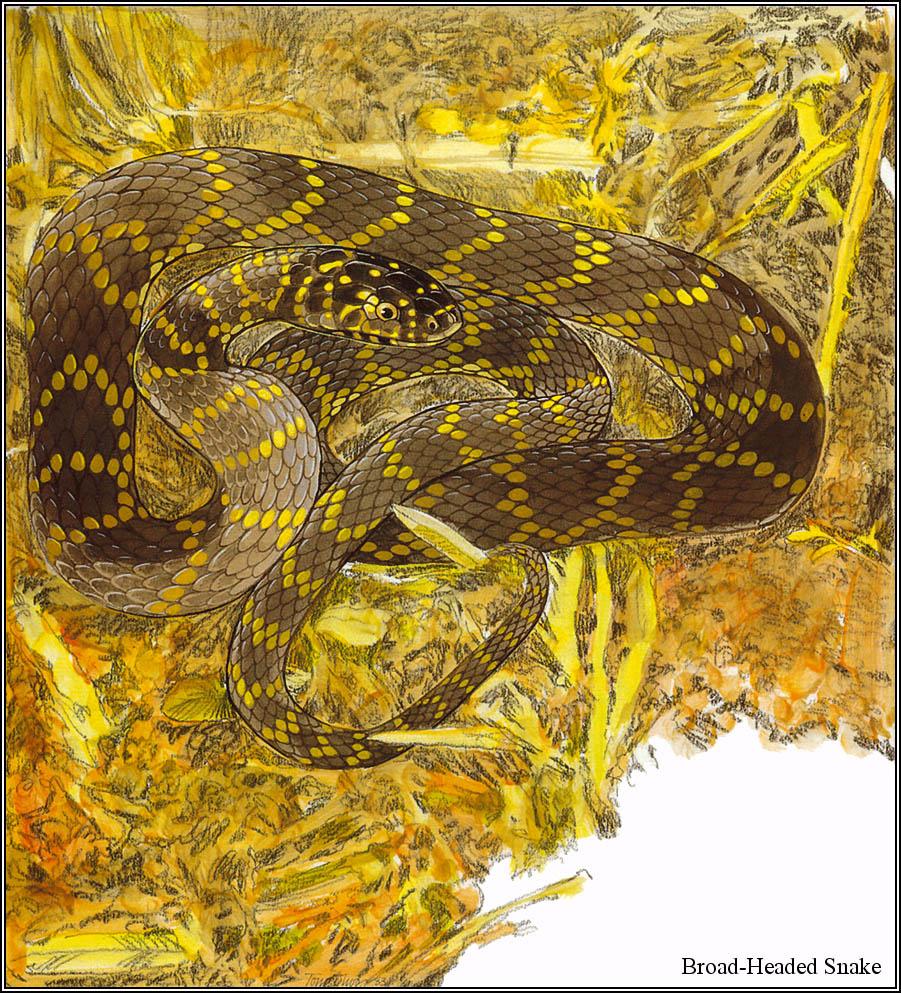 Toni Oliver. Australian endangered species 27