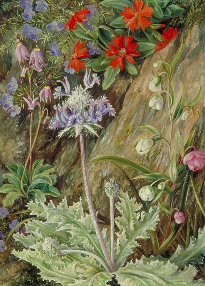 Марианна Норт. Дикие цветы Калифорнии