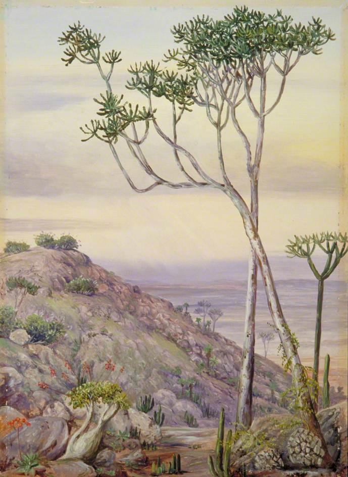 Marianna North. Vegetation on the hills near Greyhamstown