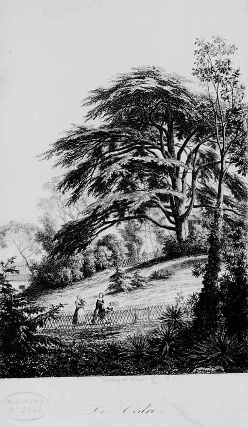 Charles-Francois Daubigny. Botanical garden