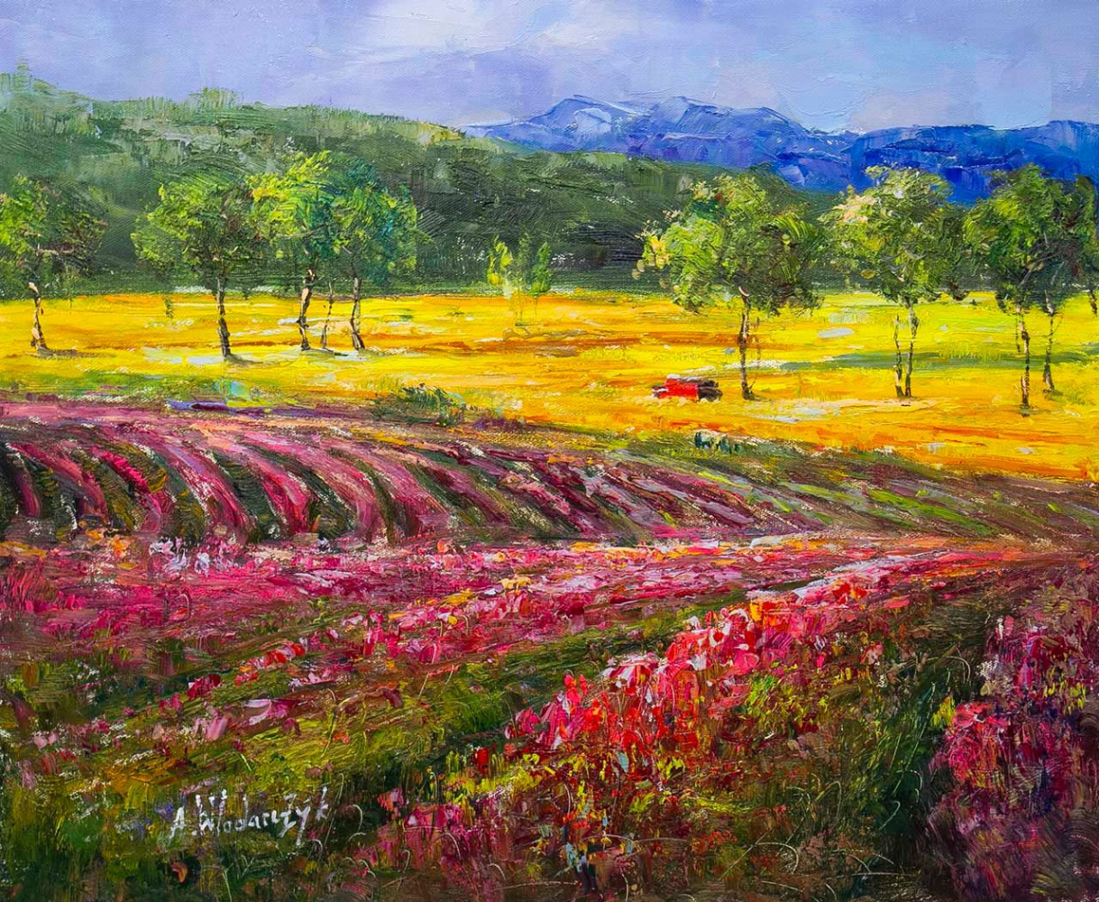 Andrzej Vlodarczyk. Blooming fields of Provence