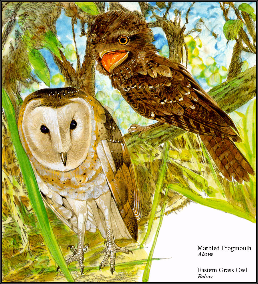 Тони Оливер. Австралийские вымирающие виды 11