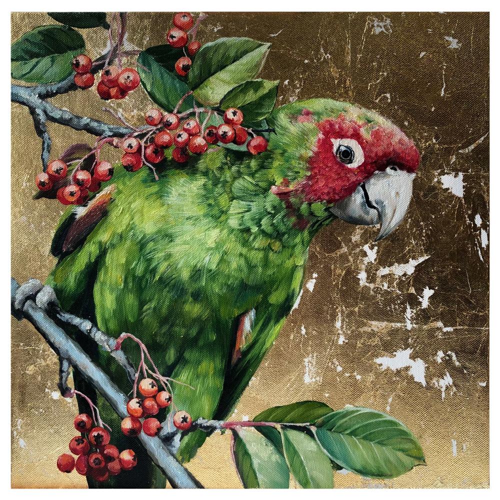 Olga Shatskaya. Индийский кольчатый попугай