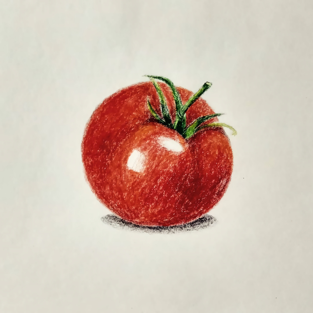 Silvia Purnama. Tomato Colored Pencil