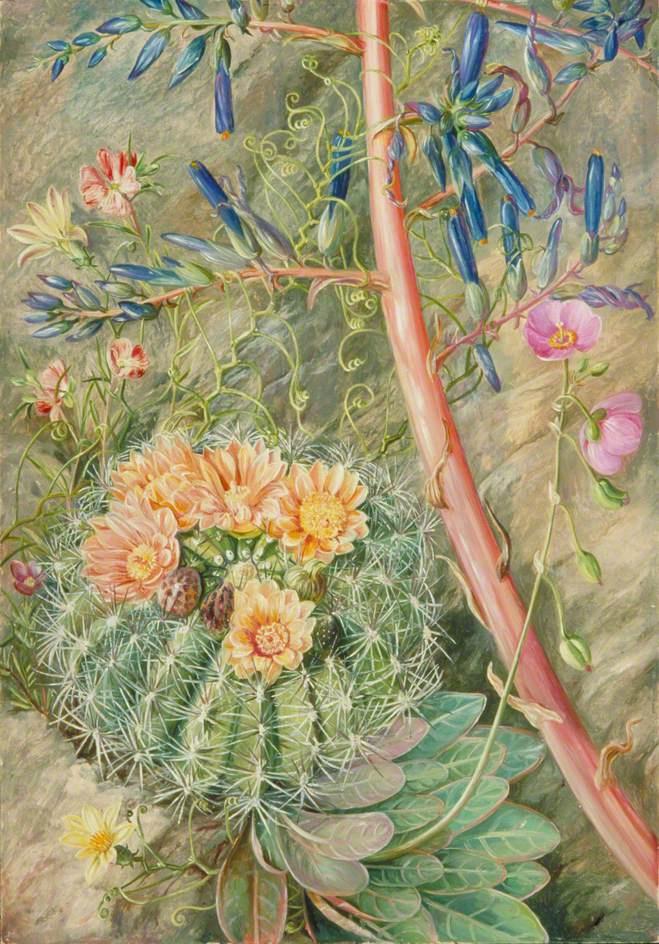 Марианна Норт. Цветы в неисследованных джунглях Кауквенаса, Чили