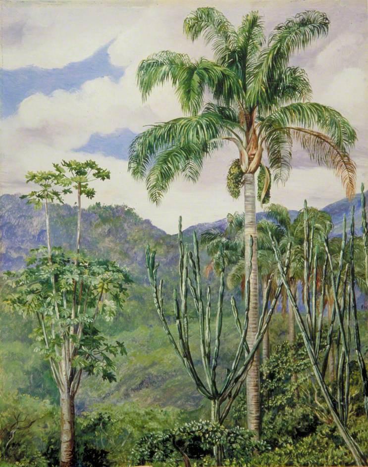 Марианна Норт. Масличные пальмы в Оуро-Пьетро, Бразилия