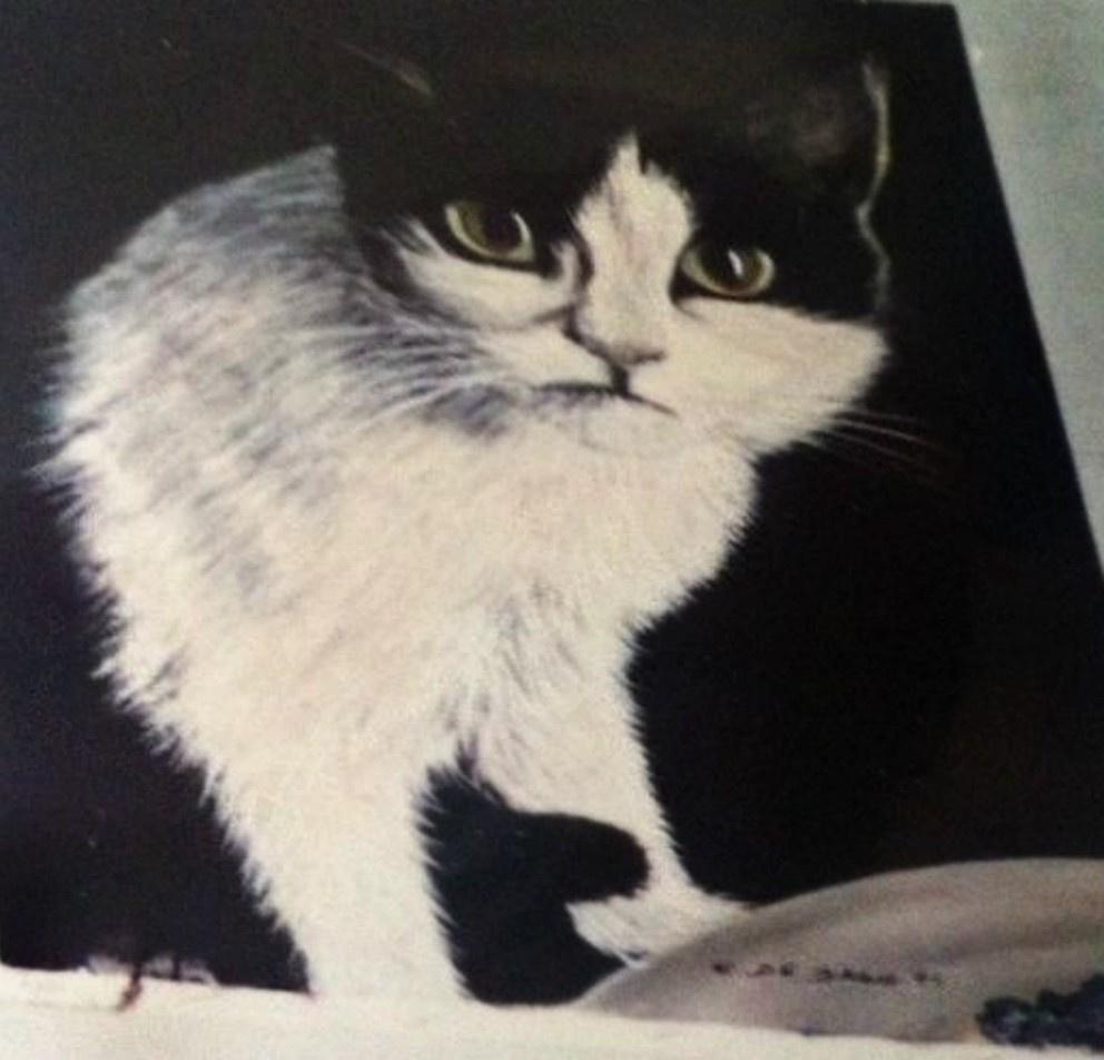 Cristina de biasio. Cat