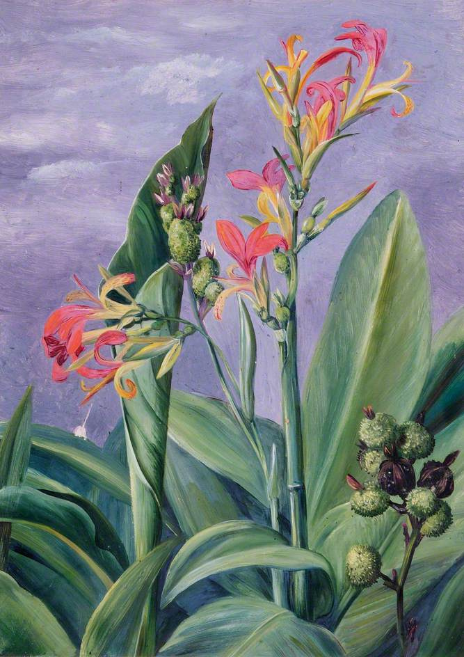 Marianna North. Unknown tropical plants