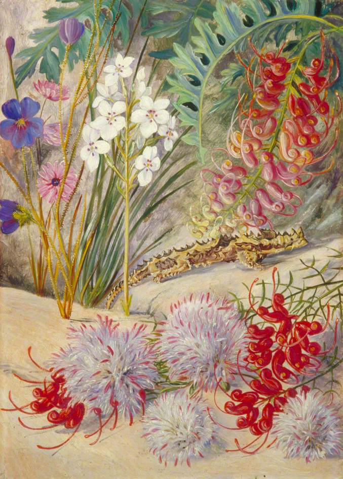 Marianna North. Flowers in the sand and lizard. Western Australia's exotic landscape
