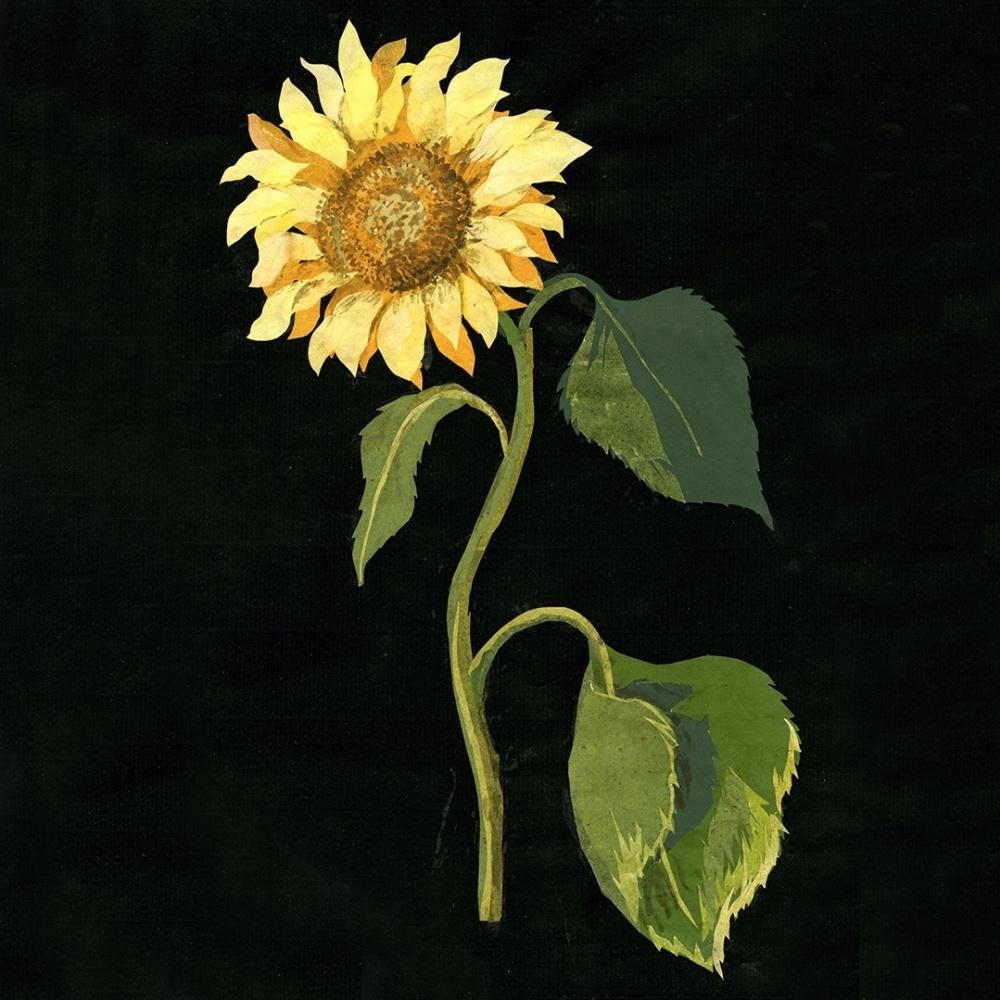 Mary Granville Delaney. Sunflower