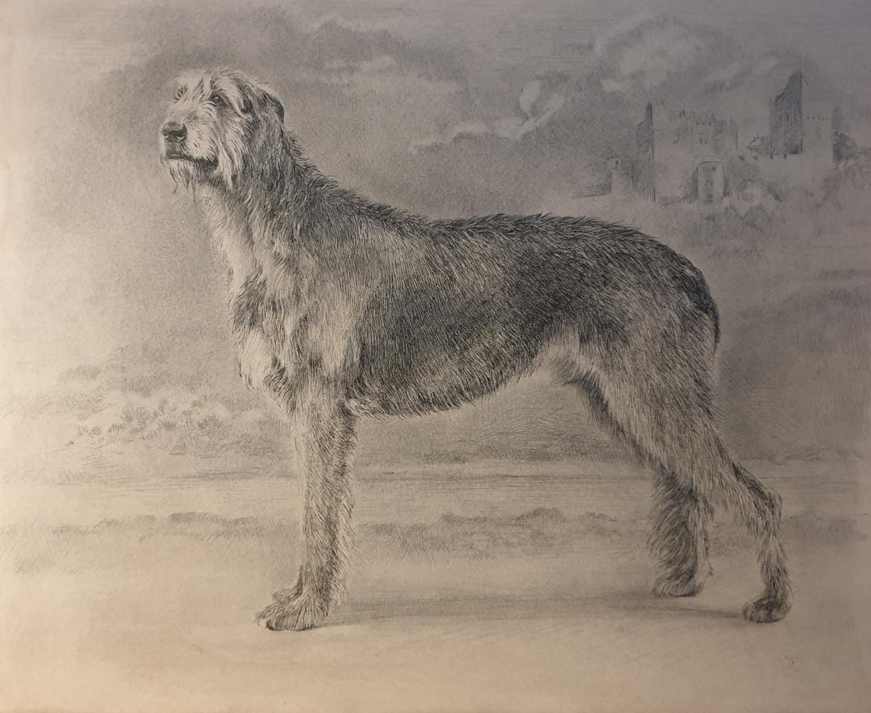 Irina Kryuchkov. Portrait of an Irish Wolfhound
