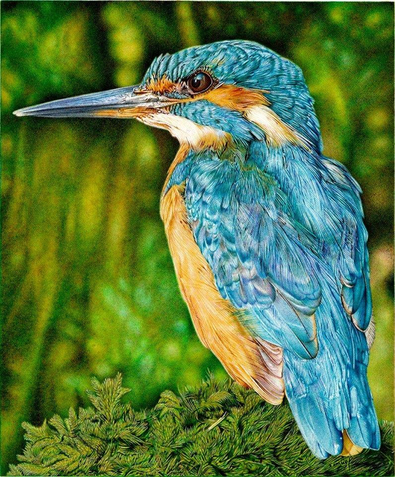Samuel Silva. Kingfisher
