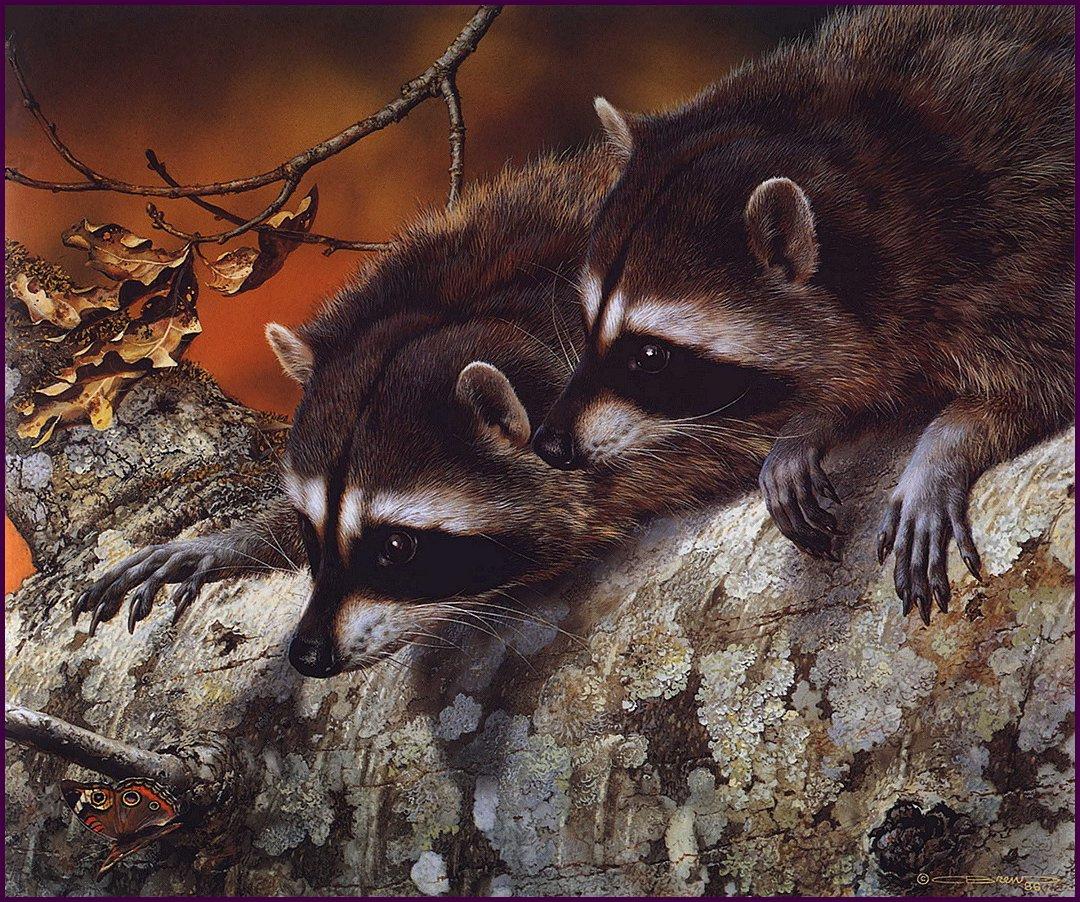 Carl Brenders. Raccoon