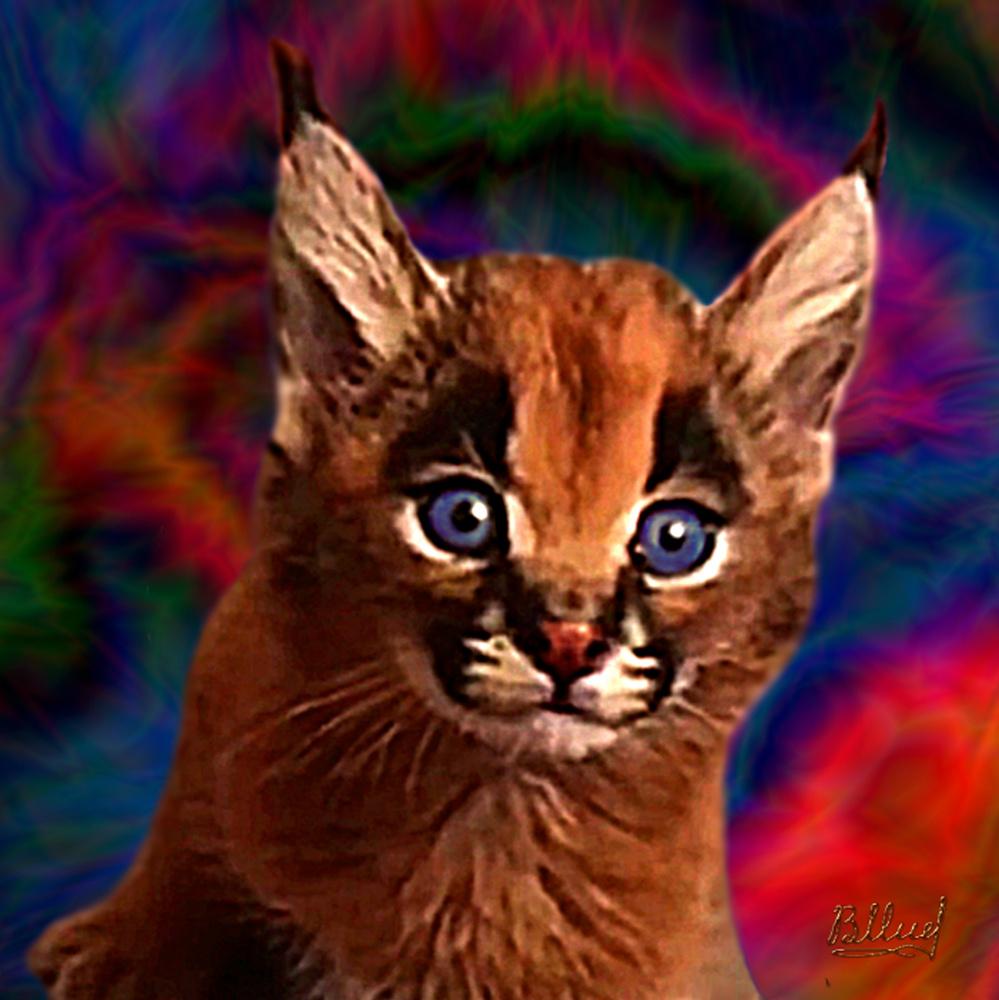 Vasiliy Mishchenko. Caracal kitten