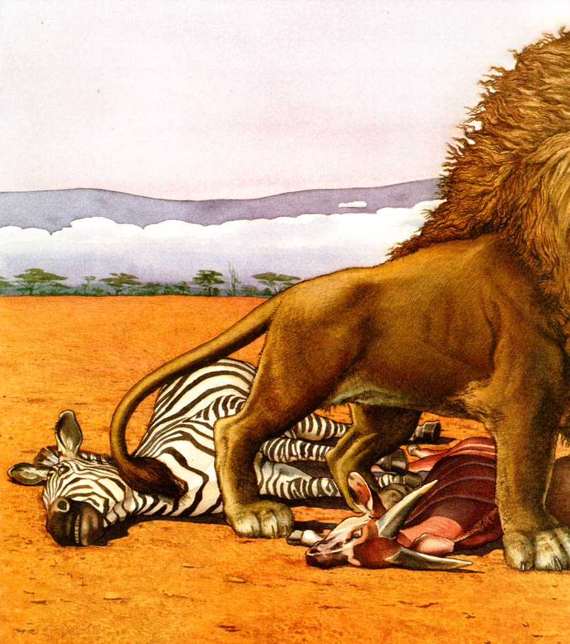 Чарльз Сантор. Лев и зебра