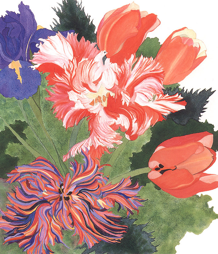 Сара Стил. Тюльпаны