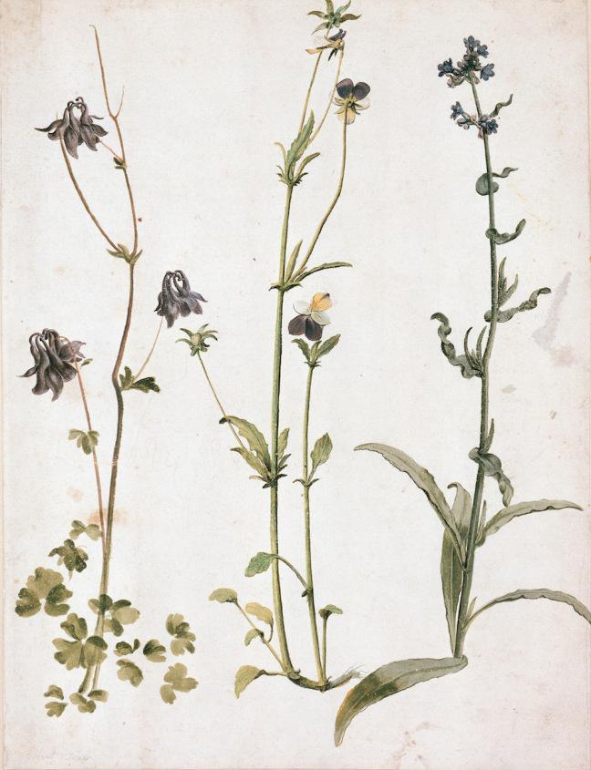 Albrecht Durer. Columbine, violets and bugloss