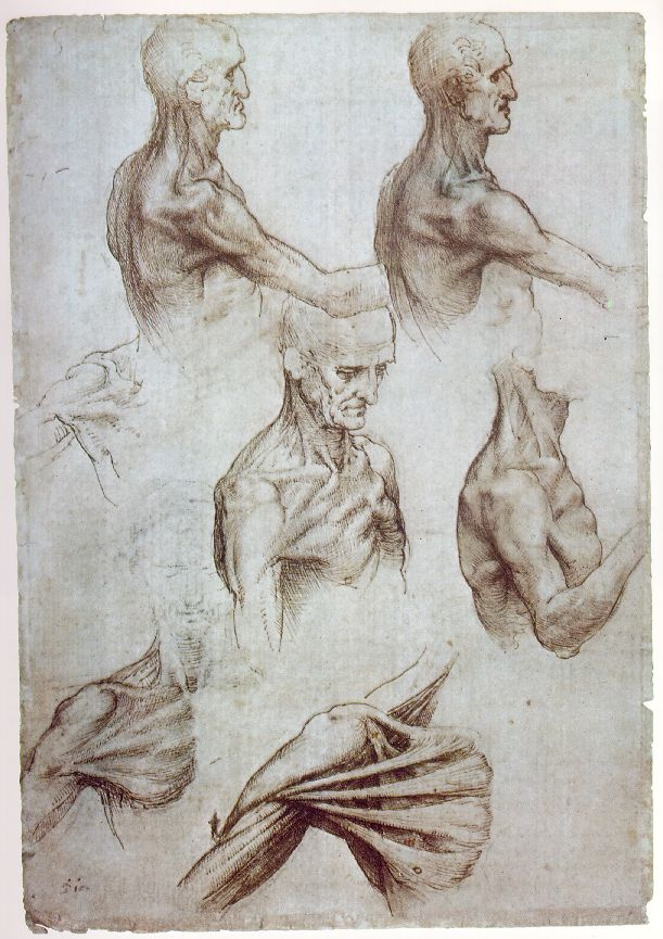 Leonardo da Vinci. Anatomical sketches of the neck and shoulders