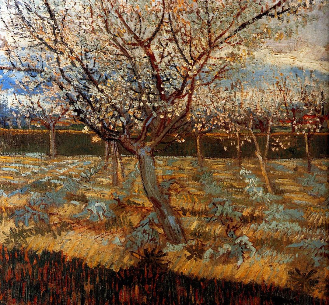 Винсент Ван Гог. Цветущие абрикосы