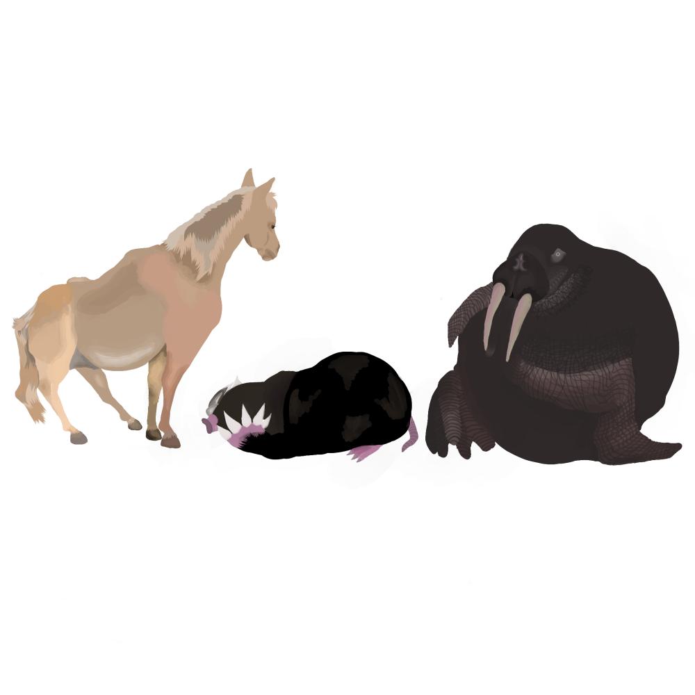 Unknown artist. A horse,a mole,a walrus